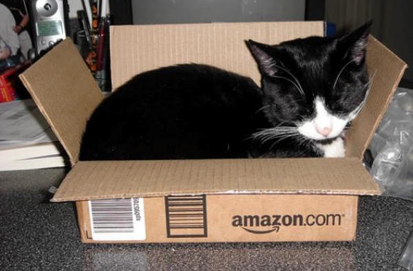 Gatos Amazon