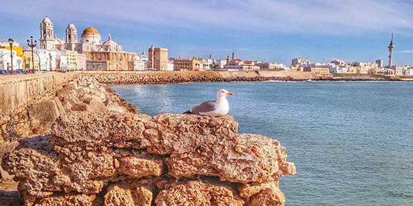 alojamientos Carnaval Cádiz precio brutal