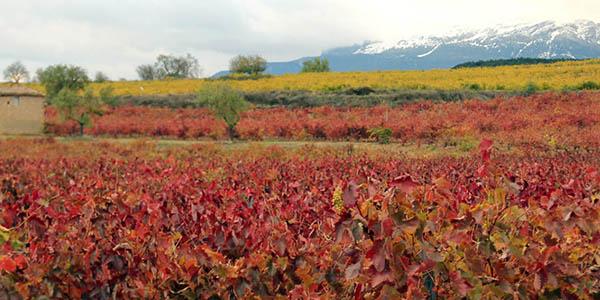 escapada con visita a bodega La Rioja chollo otoño 2018