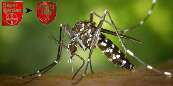 Insecticida para exteriores Bayer Protect Home contra mosquitos tigre chollo en Amazon
