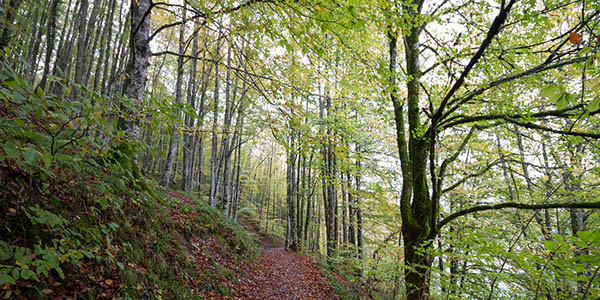 escapada de otoño a la Selva de Irati chollo