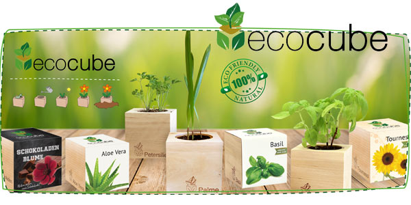 Cáctus Ecológicos Feel Green Ecocube chollo en Amazon