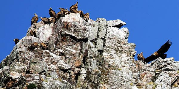 escapada de senderismo al Parque Nacional de Monfragüe chollo