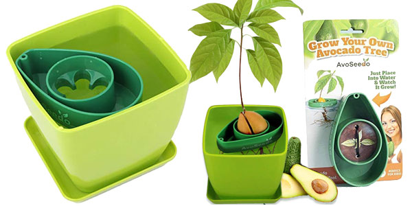 Kit de jardinería AvoSeedo para cultivar aguacates barato en Amazon