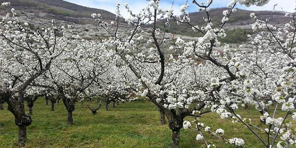 Valle Jerte escapada en primavera barata