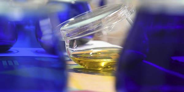 Jaén escapada con cata de aceite de oliva a precio de chollo