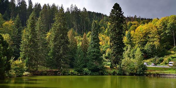 Selva Negra Alemania ruta a precio de chollo
