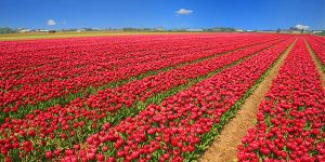 Holanda ruta en coche en primavera barata