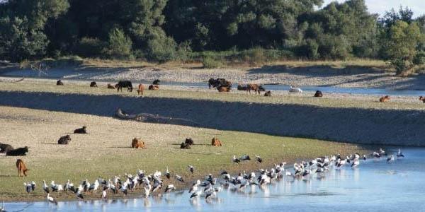 Sotos del Ebro Alfaro reserva natural escapada rural barata
