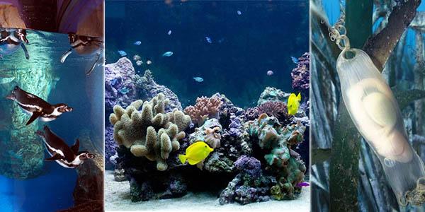 Aquàrium Barcelona visita acuarios fotografías