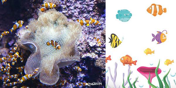 Aquarium San Sebastián actividades infantiles gratis