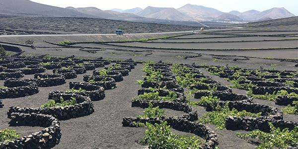 La Geria Lanzarote lugar para visitar