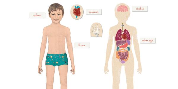 Juego educativo Montessori El Cuerpo Humano de Clementoni chollo en Amazon