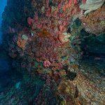 Gran Barrera Coral recorrido virtual gratuito