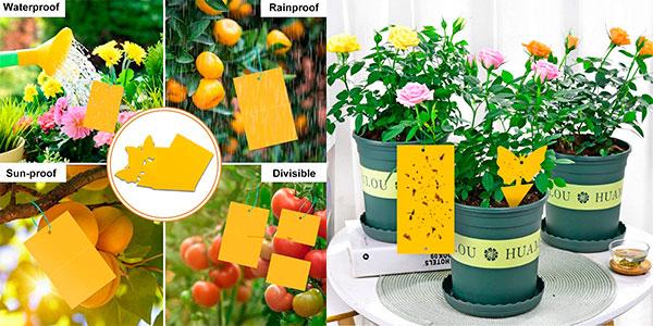 Atrapainsectos Rajvia para plantas y flores barato