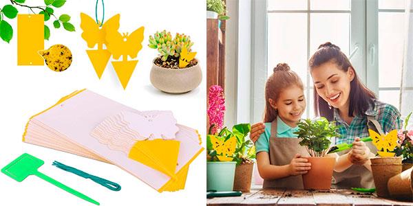 Chollo Atrapainsectos Rajvia para plantas y flores