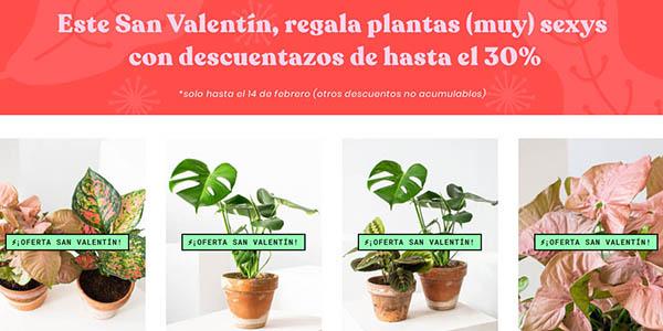 Monstera plantas de interior ofertas San Valentín
