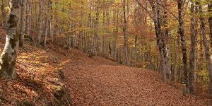 Hayedo Tejera Negra escapada otoño chollo